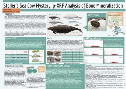 pXRF analysis of bone mineralization
